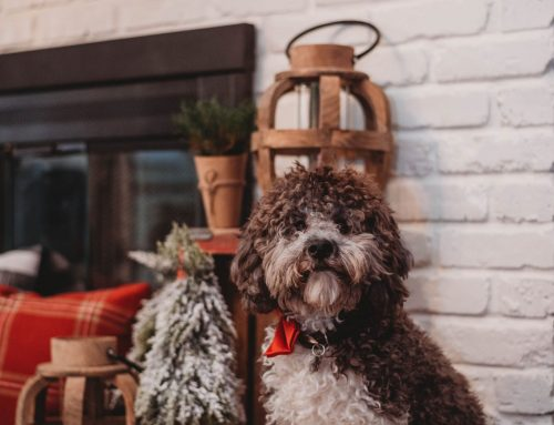 Pets are Part of Your Life, Why Not Part of Your Decor: Tips from a Designer